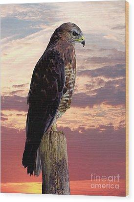 Peregrine Falcon Wood Print by Lynn Bolt