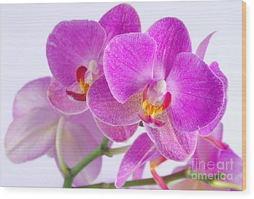 Wood Print featuring the photograph Pink Orchid by Dariusz Gudowicz