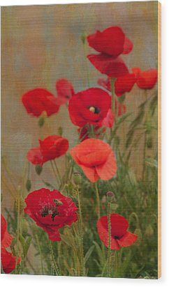 Poppies Wood Print by Carolyn Dalessandro