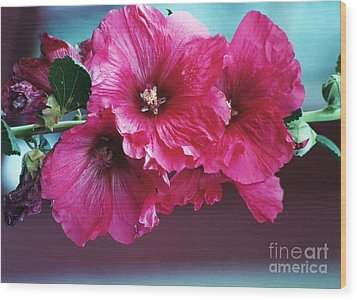 Wood Print featuring the photograph P's Hollyhocks by Juls Adams