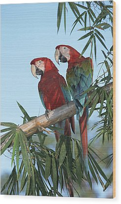 Red And Green Macaw Ara Chloroptera Wood Print by Konrad Wothe
