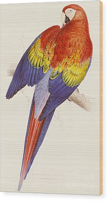 Red And Yellow Macaw Wood Print by Edward Lear