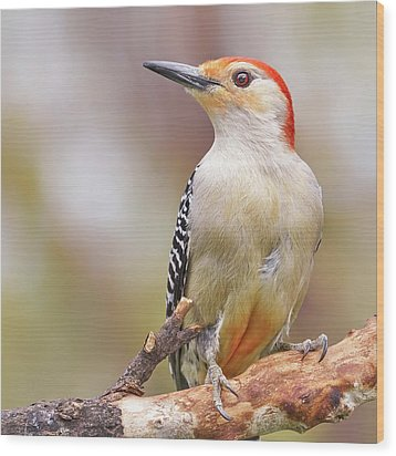 Red Bellied Woodpecker Wood Print by Jim Hughes