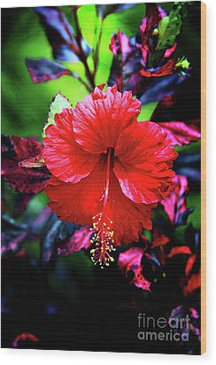 Red Hibiscus 2 Wood Print