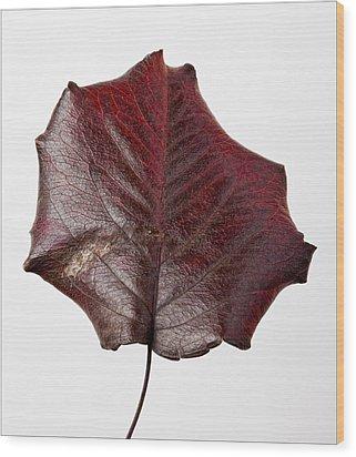 Red Leaf 4 Wood Print by Robert Ullmann