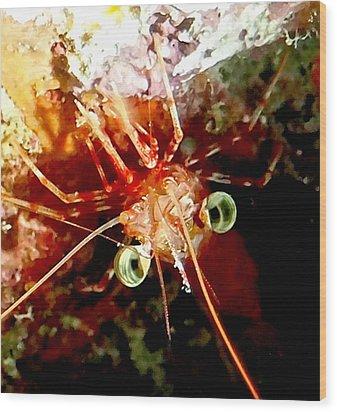 Red Night Shrimp Wood Print