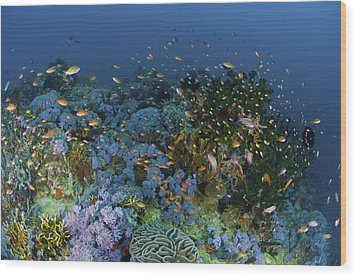 Reef Scene With Coral And Fish Wood Print by Mathieu Meur