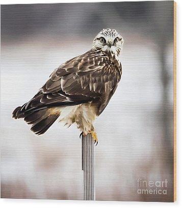 Rough-legged Hawk Wood Print by Ricky L Jones