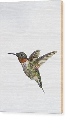 Ruby-throated Hummingbird Archilochus Wood Print by Thomas Kitchin & Victoria Hurst