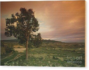 Spanish Landscape Wood Print by Angel  Tarantella