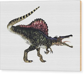 Spinosaurus Dinosaur, Artwork Wood Print by Animate4.comscience Photo Libary