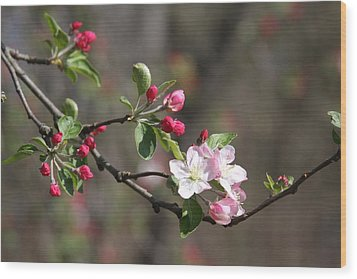 Wood Print featuring the photograph Blossom And Hope by Vadim Levin
