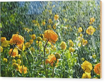 Spring Flowers In The Rain Wood Print
