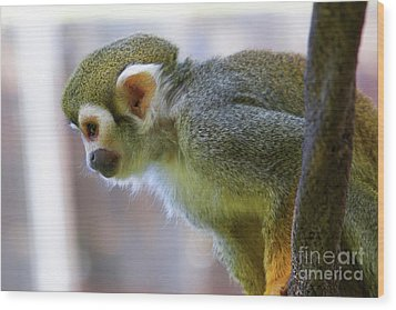Squirrel Monkey Wood Print by Afrodita Ellerman