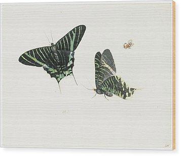 Studies Of Two Butterflies Wood Print by Anton Henstenburgh