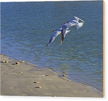 2 Terns In Flight Wood Print by Robb Stan