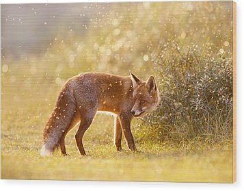The Fox And The Fairy Dust Wood Print by Roeselien Raimond