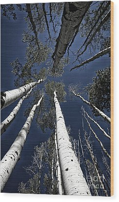 Towering Aspens Wood Print by Timothy Johnson
