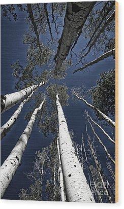 Towering Aspens Wood Print by Timothy Johnson