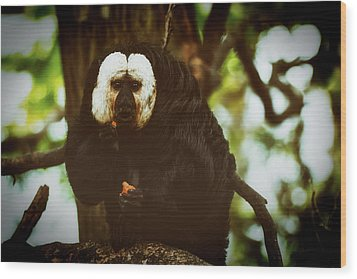 Wood Print featuring the photograph White Saki by The 3 Cats