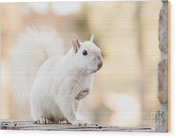 White Squirrel Wood Print by Vizual Studio