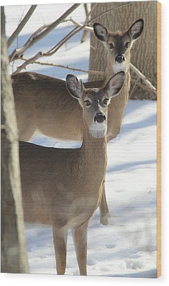 White Tailed Deer Smithtown New York Wood Print by Bob Savage