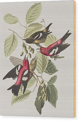 White-winged Crossbill Wood Print by John James Audubon