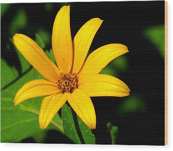 Wood Print featuring the photograph Wild Flower by Eric Switzer