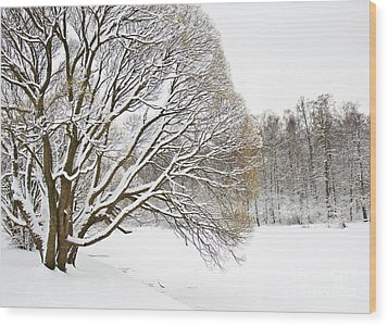 Winter Park Wood Print by Irina Afonskaya