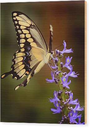 Wood Print featuring the photograph Yellow Swallowtail by Joseph G Holland