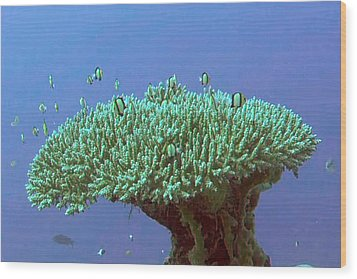 Zanzibar Island Sea  Coral Reef Vegitation Bio Diversity Of Exotic Fish Plants And  Organisims Zanzi Wood Print