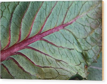 2010 Hydrangea Leaf Close Up 5 Wood Print by Robert Morin