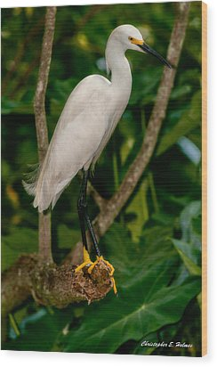 Wood Print featuring the photograph White Egret by Christopher Holmes