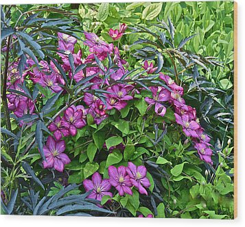 2015 Summer At The Garden Beautiful Clematis Wood Print