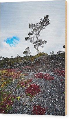 20150516144211fla24528-master Wood Print