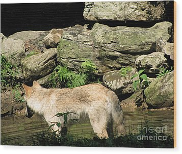 Wood Print featuring the photograph The Wild Wolve Group A by Debra     Vatalaro