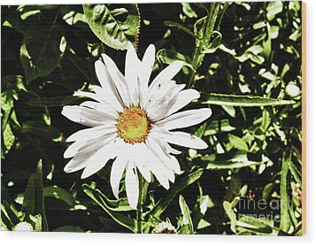 278 - Flower Series 1.4 Hdr Wood Print by Chris Berry