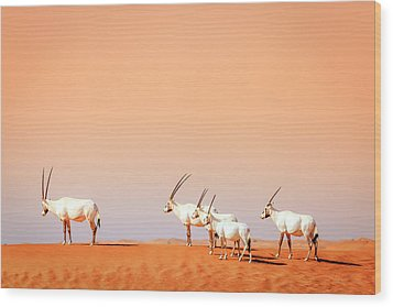 Wood Print featuring the photograph Arabian Oryx by Alexey Stiop