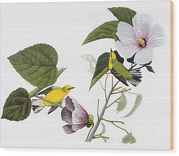 Audubon: Warbler, (1827-38) Wood Print by Granger