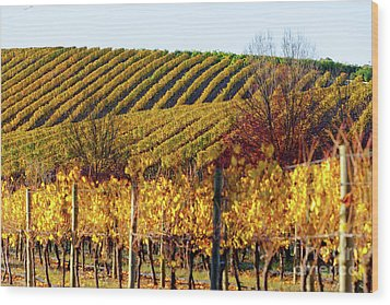 Wood Print featuring the photograph Autumn Vines by Bill Robinson