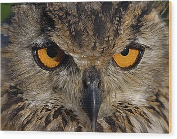 Wood Print featuring the photograph Bengal Eagle Owl by JT Lewis