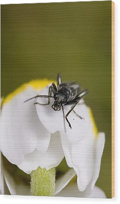 Bug Wood Print by Andre Goncalves
