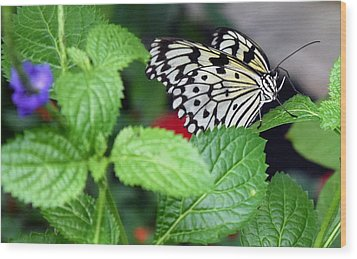 Paper Kite Butterfly No. 3 Wood Print by Sandy Taylor