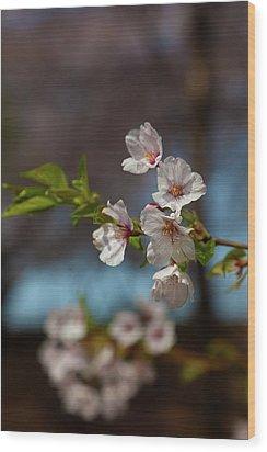 Cherry Trees Wood Print by Robert Ullmann