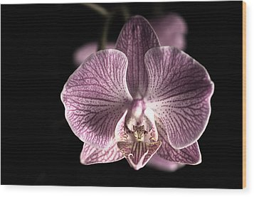 Close Up Shoot Of A Beautiful Orchid Blossom Wood Print