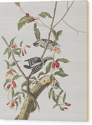 Downy Woodpecker Wood Print by John James Audubon