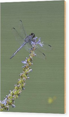 Dragon Fly Wood Print by Linda Geiger