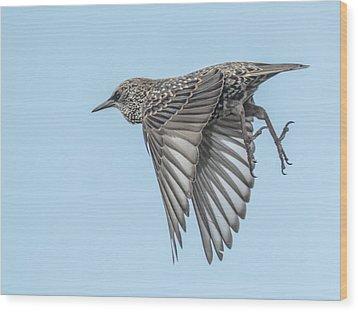 European Starling Wood Print by Tam Ryan