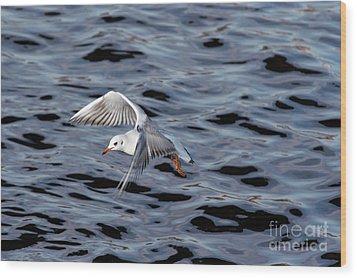 Flying Gull Wood Print by Michal Boubin