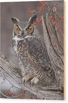 Great Horned Owl Wood Print by Cindy Lindow
